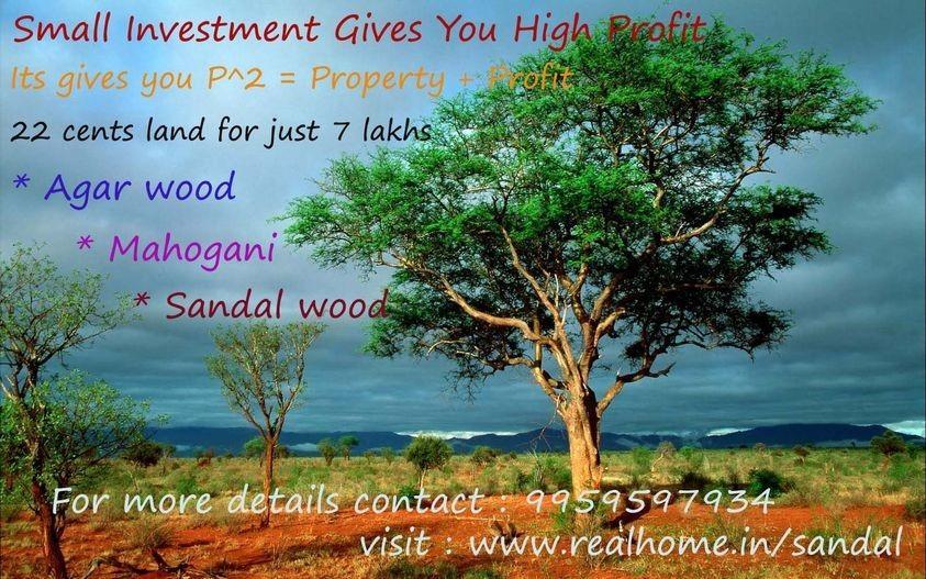 22 cents Plantation Plots in AddankiPrakasam district for 7 lakhs